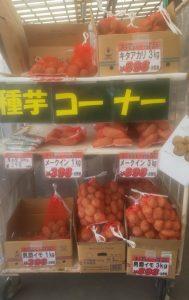 ジャガイモの種芋を入荷しました!